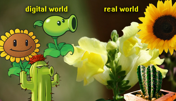 Grow real Plants vs Zombies